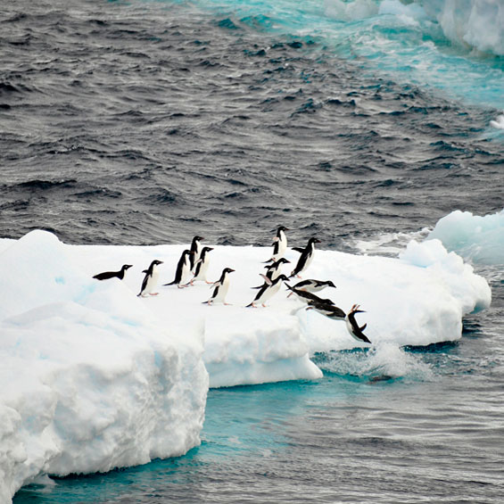 White Christmas with Penguins