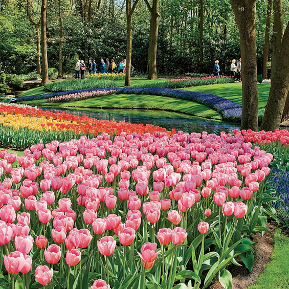 Dutch Waterways and Tulips