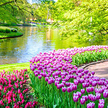 Floral Holland in the Spring
