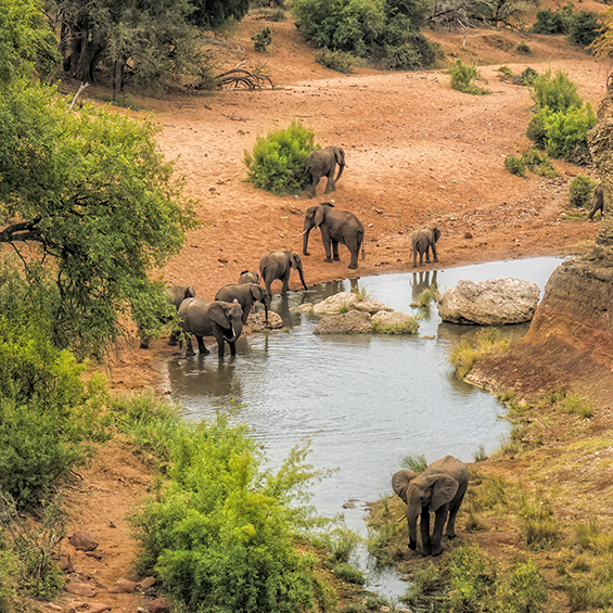 Wildlife and Landscapes of South Africa for Solo Travellers